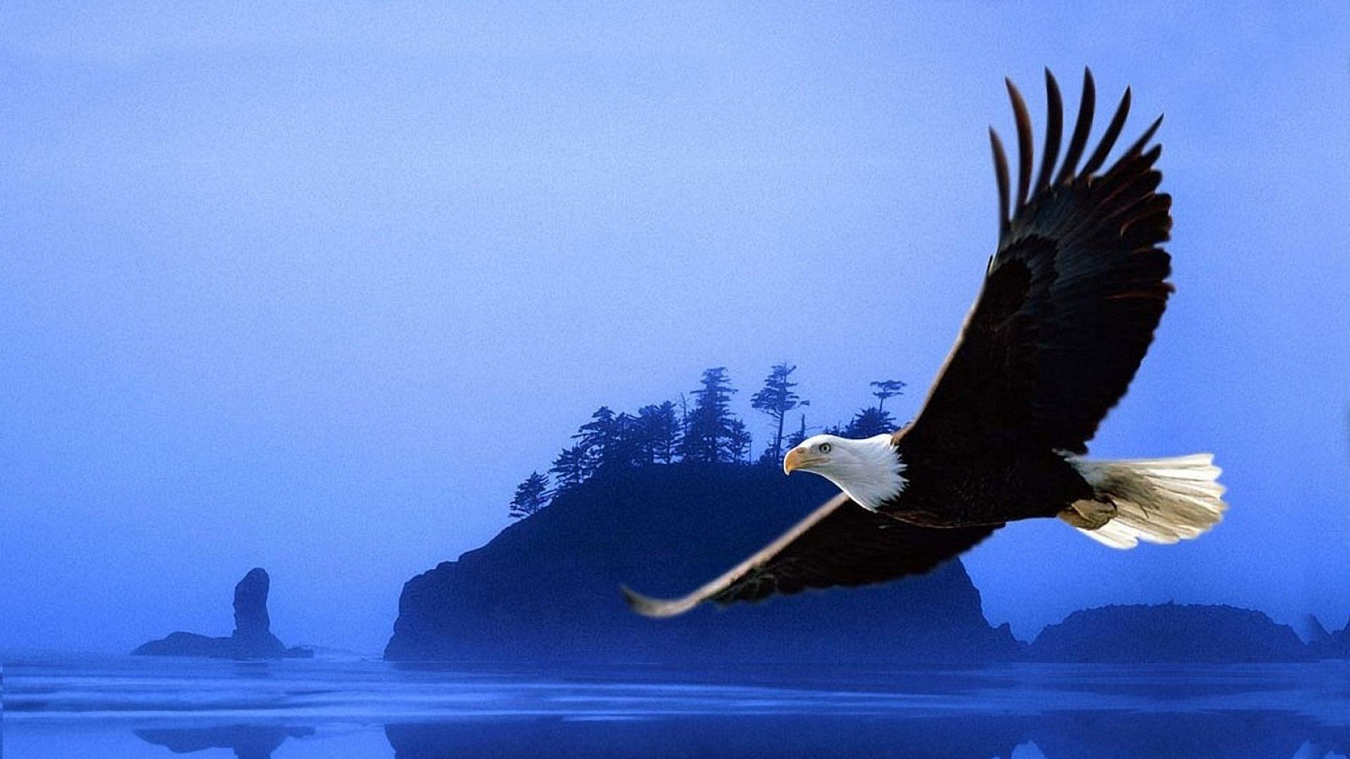 A Fabulosa História Da águia Renovada