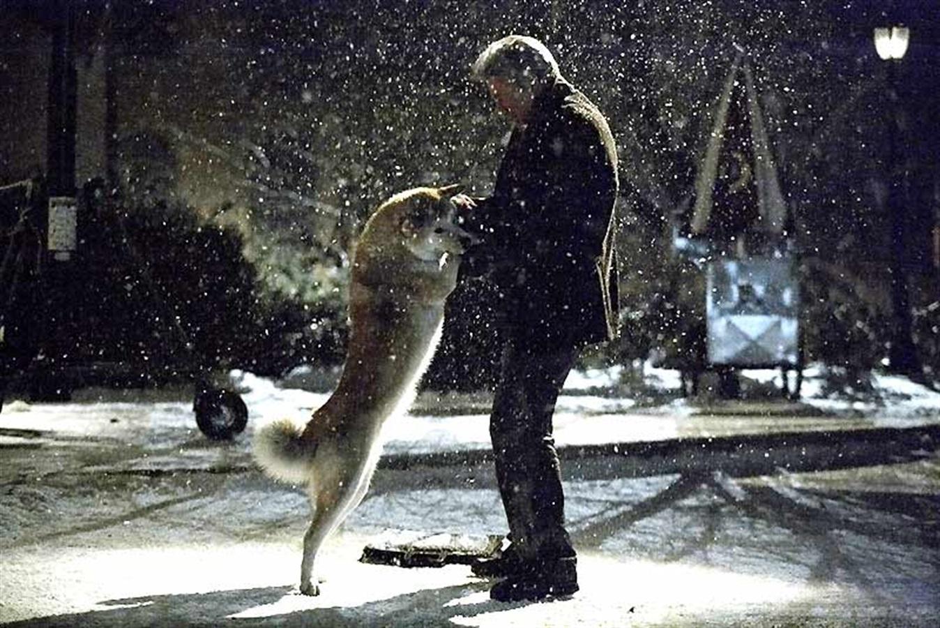 Top-5-Filmes-com-Cachorros-Sempre-ao-seu-Lado