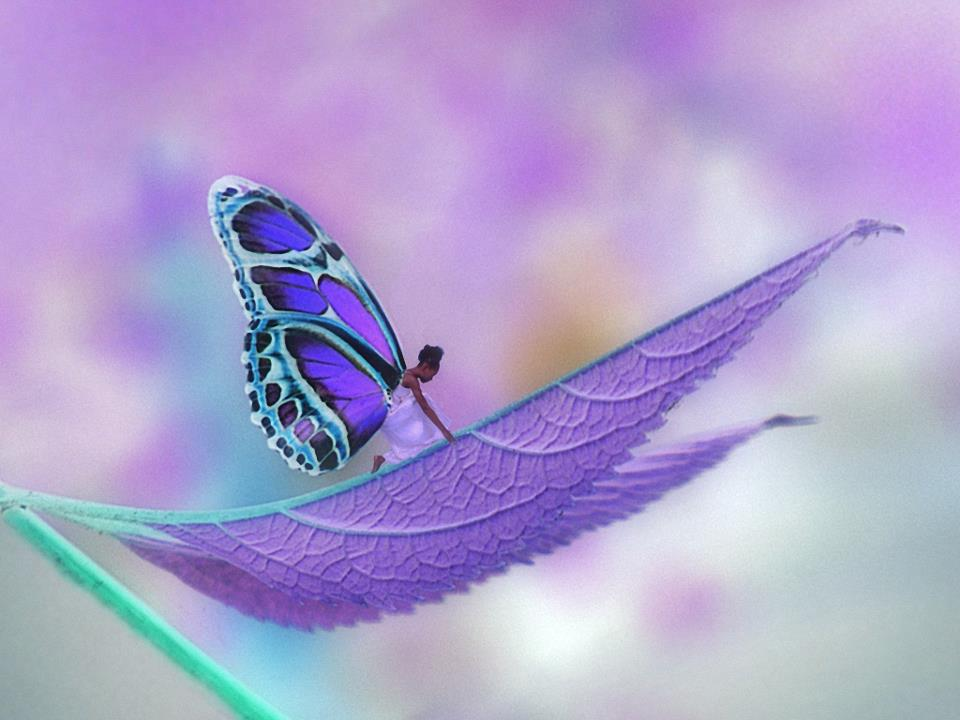 A borboleta no casulo (a lição da borboleta)