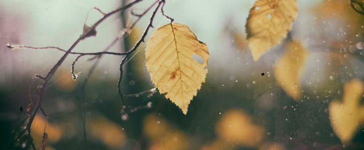 30 Frases De Osho Para Você Refletir A Soma De Todos Os Afetos