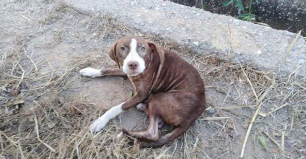 Cão de rua cuidou de idoso com Alzheimer que ficou perdido a noite inteira